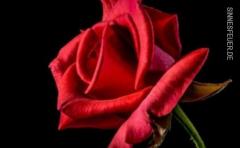 Sinnlicher Mann 44 sucht eine Affäre,Freundschaft plus