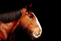 M mit Pferdefetisch sucht
